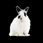 Mein erstes Kaninchen
