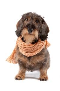 Mein Schal
