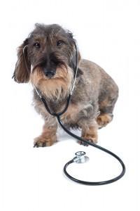 Mein Tierarzt