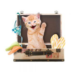 Katze sitzt winkend und lachend in Koffer